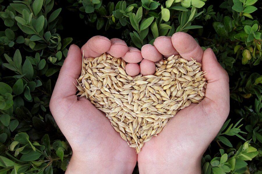 Continua l'impegno della Regione per sostenere l'agricoltura