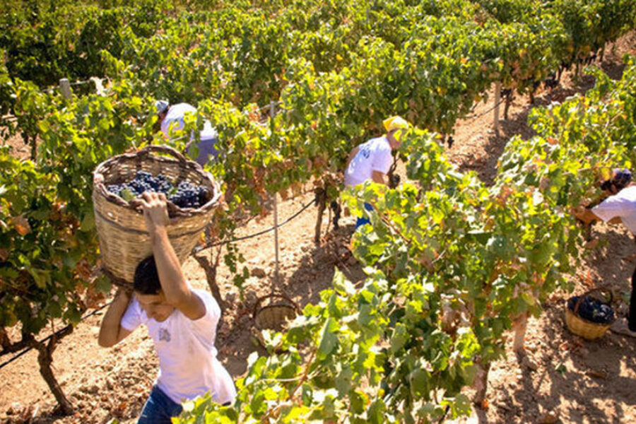 Presentata un'interrogazione in Regione sulla manodopera per i lavori di raccolta agricola