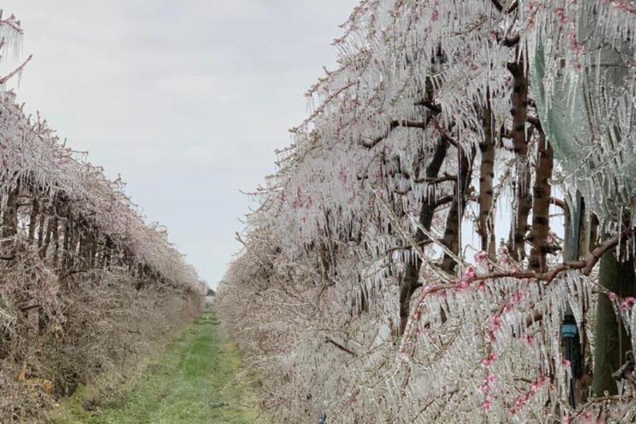 Risoluzione sui danni causati dalle gelate e dalle basse temperature in agricoltura