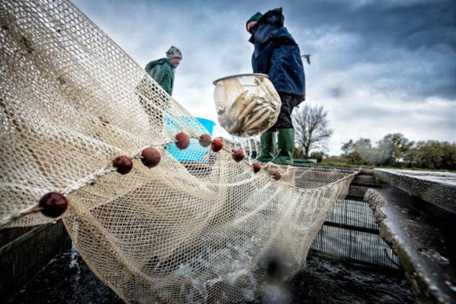 Pesca, il Pd in Regione dopo le proteste del settore, chiede a Governo e Ue di rivedere le proprie politiche